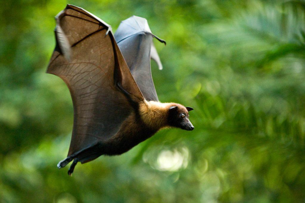 Flaggermus er en av flere spennende skapninger som betraktes i Randers Regnskov.