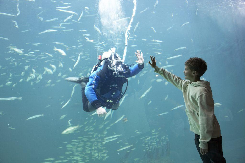 Oceanarium5