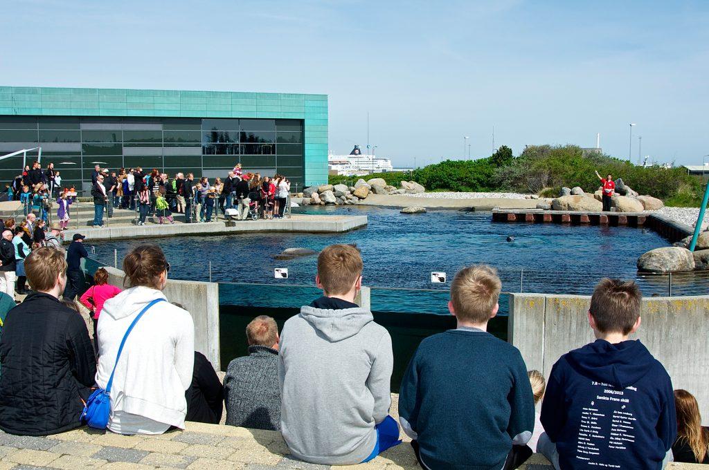 Selene har sitt eget store området ved akvariumet. (Foto: www.oceanarium.dk)